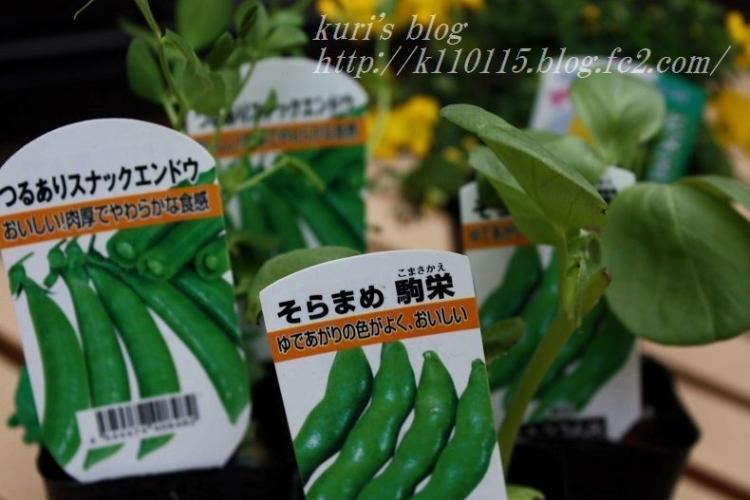 2019家庭菜園開始 (1)