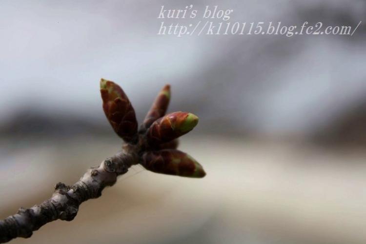 2019春の足音 (2)