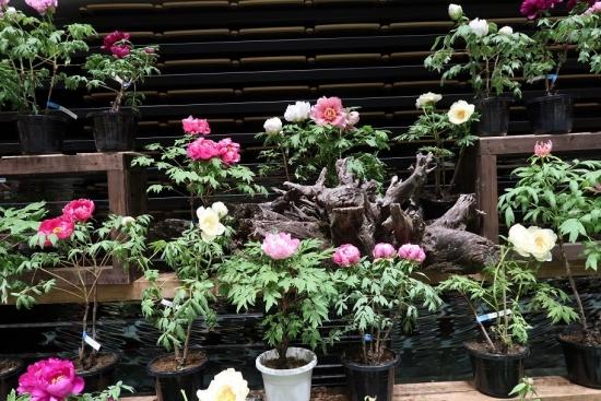 道の駅日光 牡丹室内庭園