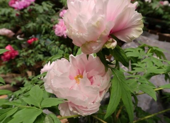 道の駅日光 牡丹室内庭園 景観