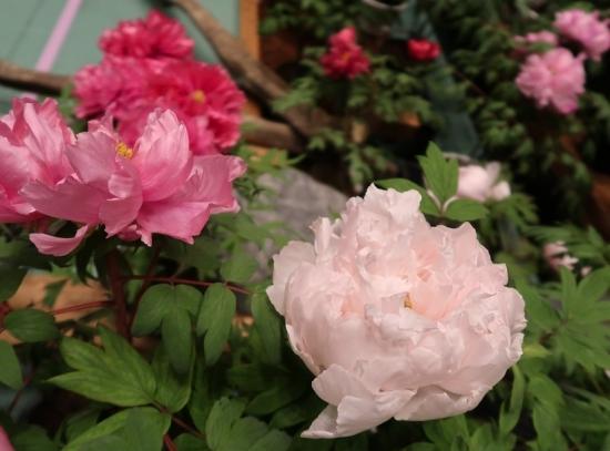 道の駅日光 牡丹室内庭園 海峰