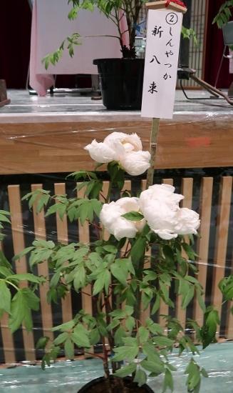 道の駅日光 牡丹室内庭園 新八束