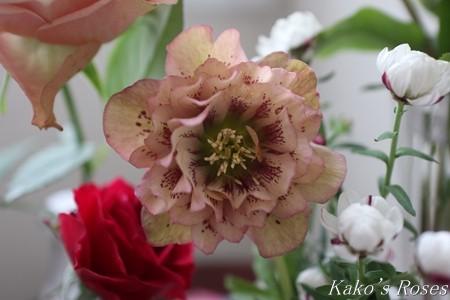 s-IMG_1566kako.jpg