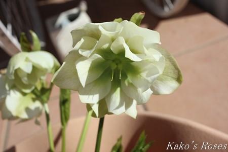 s-IMG_1587kako.jpg