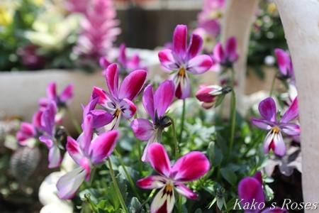 s-IMG_1610kako.jpg