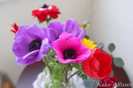 s-IMG_1673kako.jpg