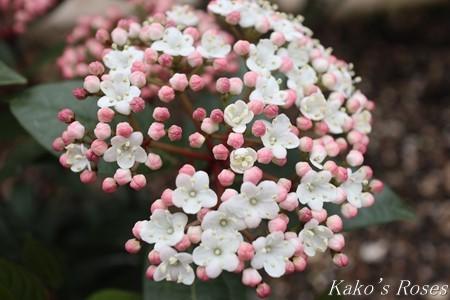 s-IMG_1679kako.jpg