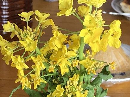 3142019 菜の花 S1