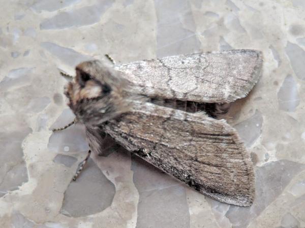 クラマトガリバ
