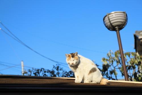 屋根の上で得意