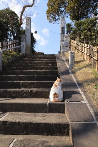 階段にシロ