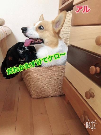 th_IMG_8625.jpg