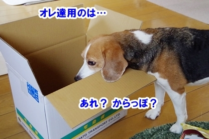 なおなお 2