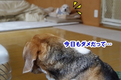 なおなお 5