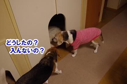 ドラマ 4