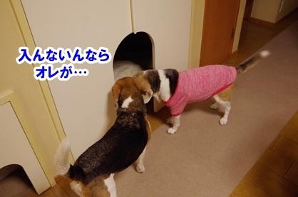 ドラマ 5