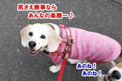 狂犬病と 4