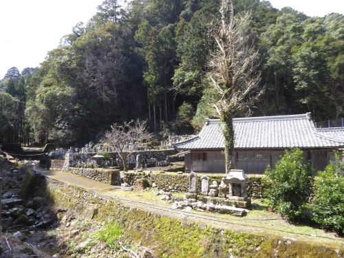 クマノザクラ(古座川町明神)2019.3.16-36