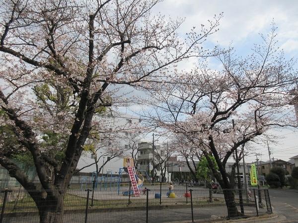 190328up05もうすぐ桜まつり