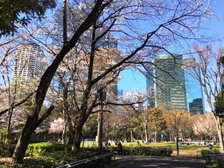 19shinjyukusakura0403_6264.jpg