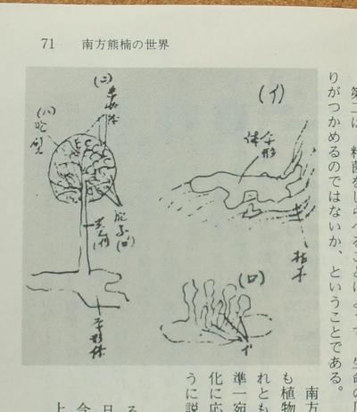 鶴見和子 南方熊楠 02