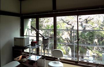桜2019個室内
