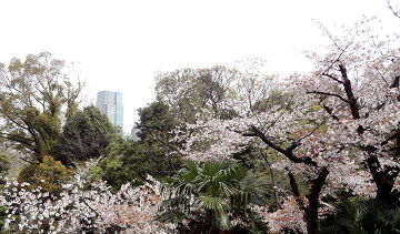 桜2019個室