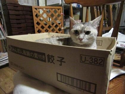 大好きな箱に入って