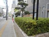 1-DSCN1580.jpg