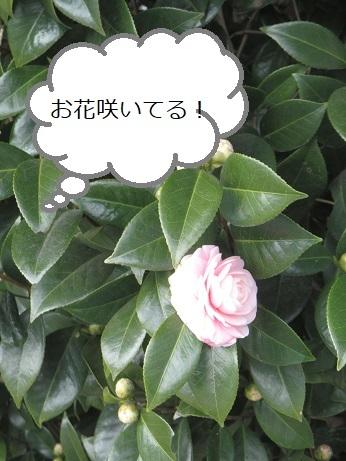 IMG_4245_1.jpg