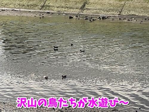 水辺での鳥