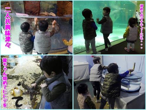 初めての水族館に