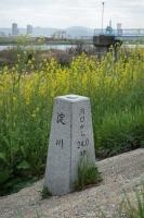 BL190323淀川右岸ラン11IMG_2188