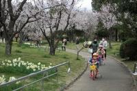 BL19324山田池公園6IMG_2222