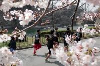 BL190401大阪城の桜1IMG_2478