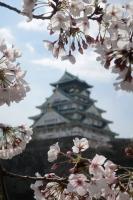 BL190401大阪城の桜2IMG_2477