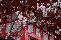 BL190402近所の桜3IMG_2507
