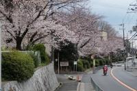 BL190402近所の桜4IMG_2522
