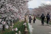 BL190402近所の桜9IMG_2540