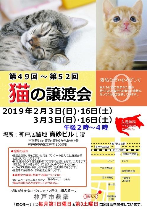 猫の譲渡会 年1月・2月