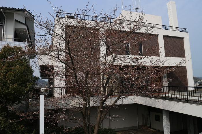 文化センター前の染井吉野 31 3 30