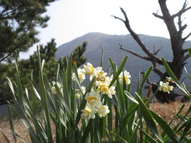 IMG0007JPG鷹取山から福智山