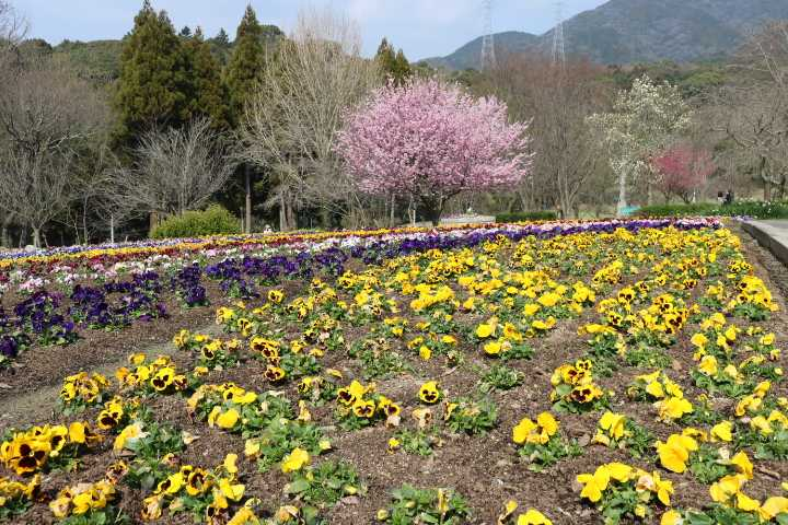 IMG0541JPGお花畑
