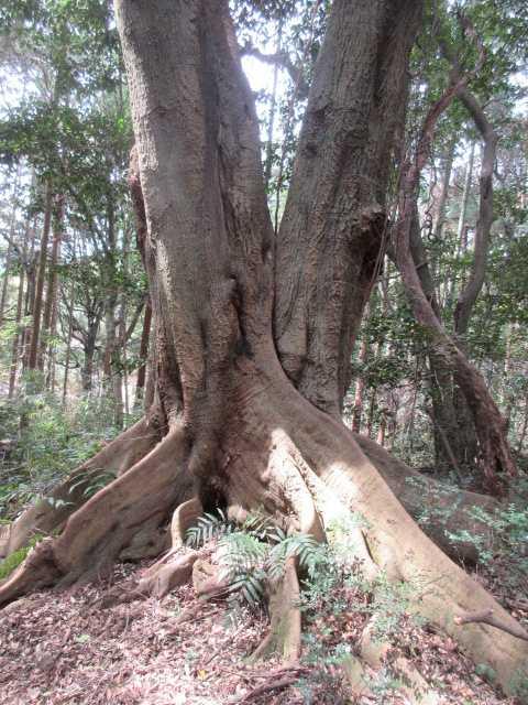 IMG0060JPG合体樹