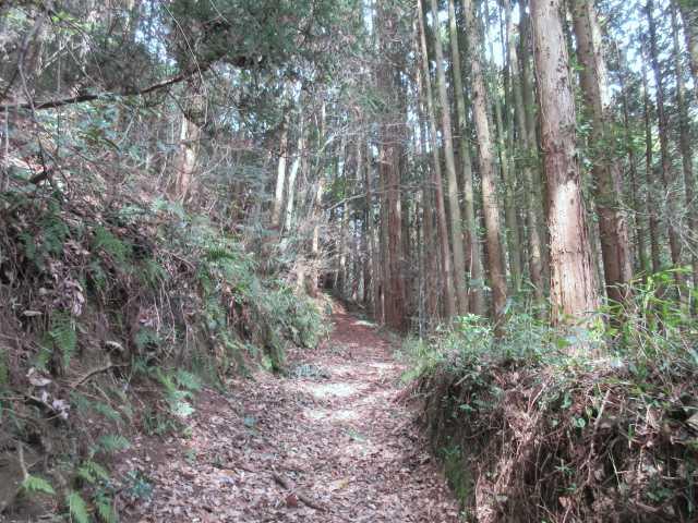 IMG0072JPG続く林道