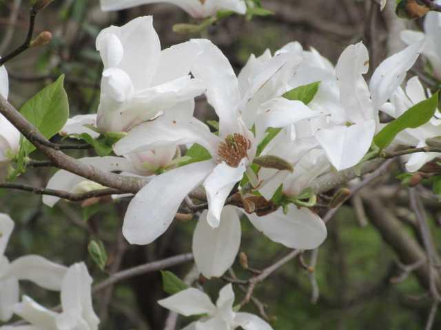 IMG0087JPG白い花