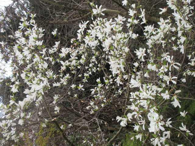 IMG0089JPG白い花4
