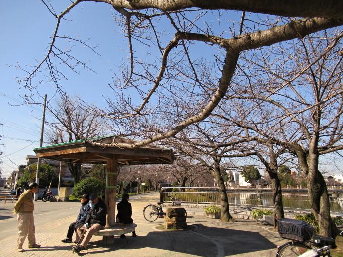 190309桜 (4)