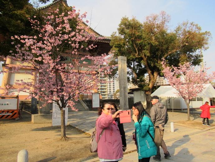 190312桜 (2)
