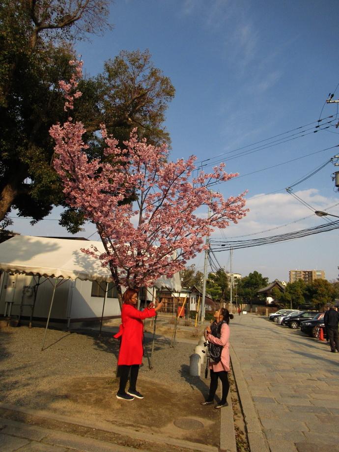 190312桜 (5)